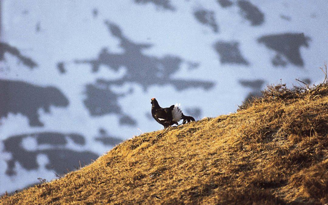 Les chasseurs sont responsables vis-à-vis des espèces chassables